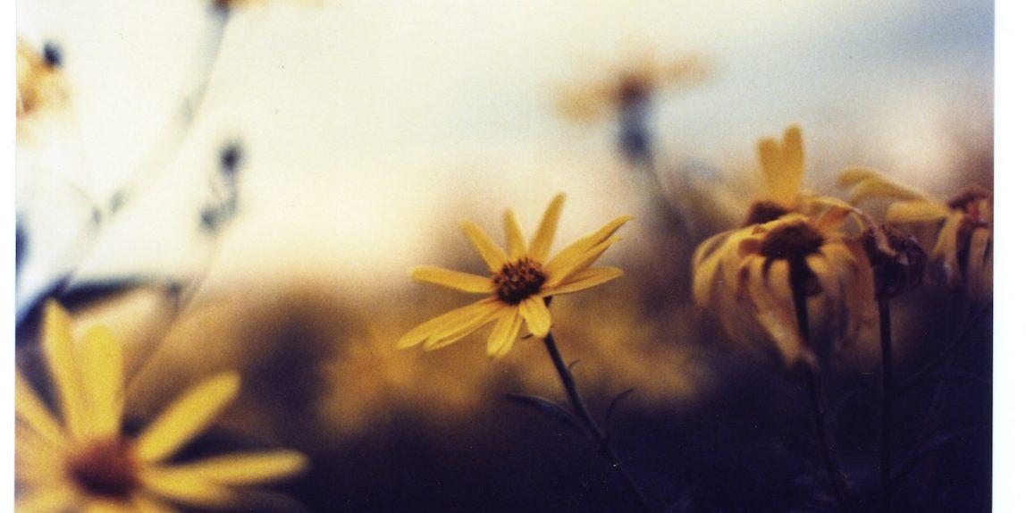 Blumen by Bilora